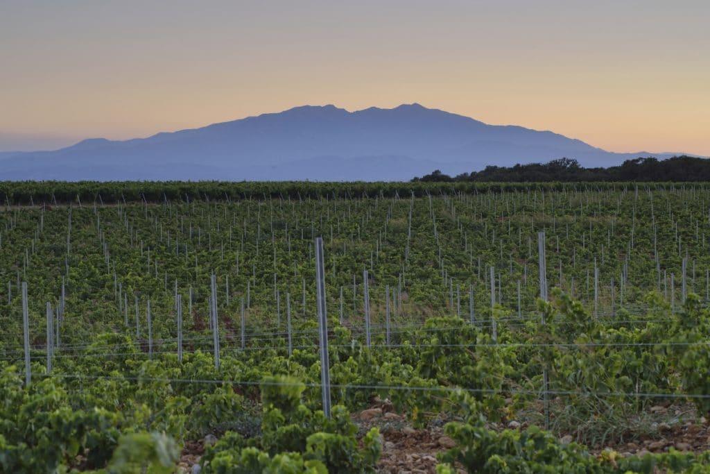 Vignobles Pyrenees Orientales
